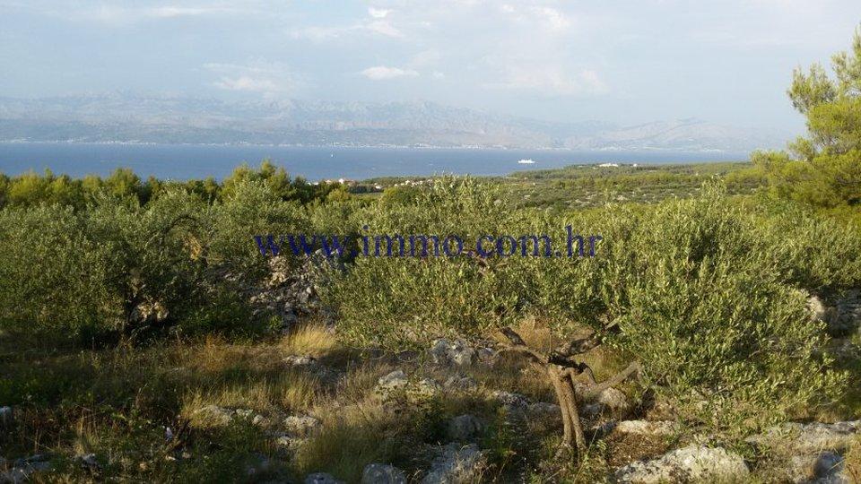 AGRICULTURAL LAND ON THE ISLAND OF BRAČ